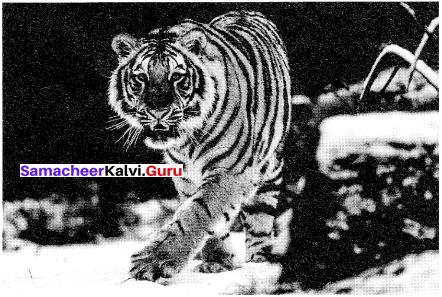 Samacheer Kalvi 10th English Picture Composition Interpretation 5