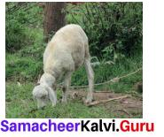 Samacheer Kalvi 7th Maths Solutions Term 2 Chapter 1 Number System 2.2 1