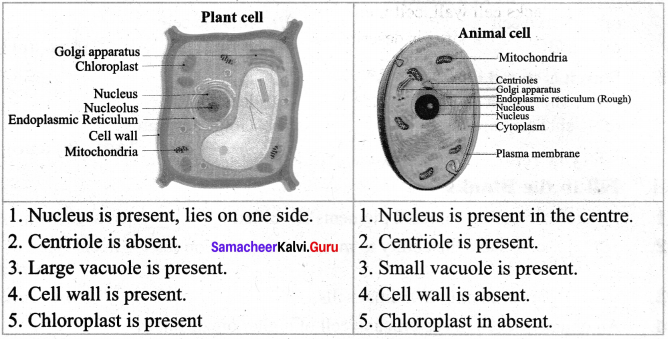 Samacheer Kalvi 7th Science Solutions Term 2 Chapter 4 Cell Biology image - 3