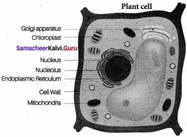 Samacheer Kalvi 7th Science Solutions Term 2 Chapter 4 Cell Biology image - 5