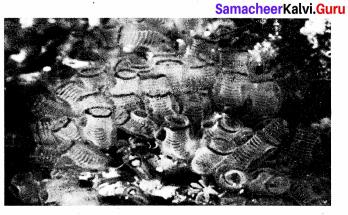 Samacheer Kalvi 9th Science Solutions Chapter 17 Animal Kingdom 4