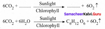 Samacheer Kalvi 9th Science Solutions Chapter 19 Plant Physiology 1
