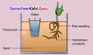 Samacheer Kalvi 9th Science Solutions Chapter 19 Plant Physiology 3