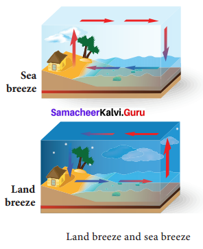 Samacheer Kalvi 9th Science Solutions Chapter 7 Heat 2