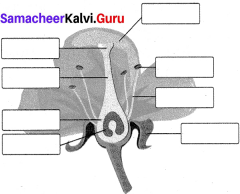 Samacheer Kalvi 7th Science Solutions Term 1 Chapter 5 Reproductive and Modification In Plants image - 1