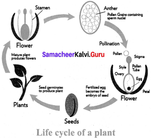 Samacheer Kalvi 7th Science Solutions Term 1 Chapter 5 Reproductive and Modification In Plants image - 4