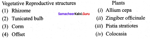 Samacheer Kalvi 12th Bio Botany Solutions Chapter 1 Asexual and Sexual Reproduction in Plants