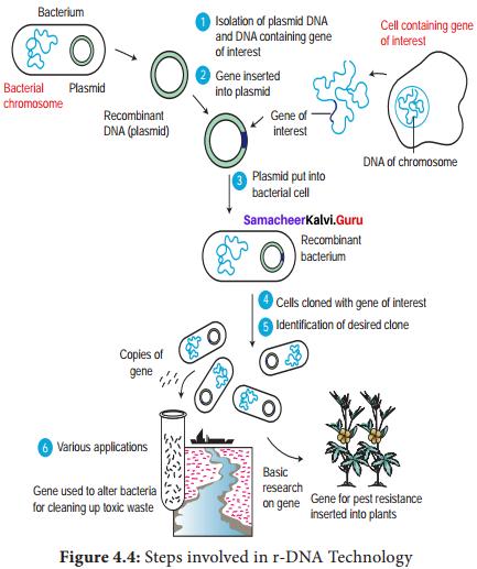 Samacheer Kalvi 12th Bio Botany Solutions Chapter 4 Principles and Processes of Biotechnology