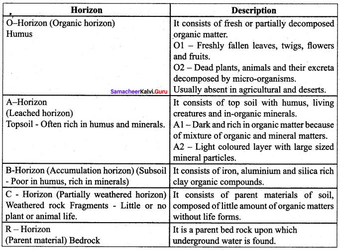 Samacheer Kalvi 12th Bio Botany Solutions Chapter 6 Principles of Ecology
