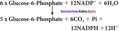 Samacheer Kalvi 11th Bio Botany Solutions Chapter 14 Respiration 1