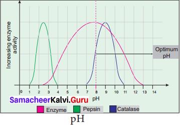 Samacheer Kalvi 11th Bio Botany Solutions Chapter 8 Biomolecules 3