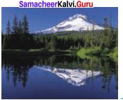 Samacheer Kalvi 8th Science Solutions Term 1 Chapter 3 Light 13