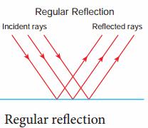 Samacheer Kalvi 8th Science Solutions Term 1 Chapter 3 Light 14