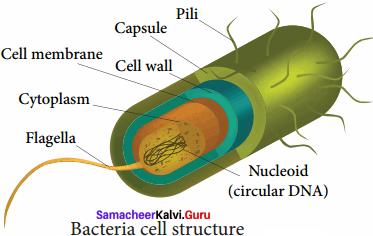 Samacheer Kalvi 8th Science Solutions Term 1 Chapter 6 Micro Organisms 1