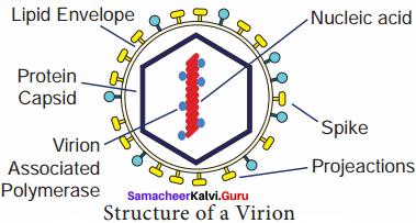 Samacheer Kalvi 8th Science Solutions Term 1 Chapter 6 Micro Organisms 3