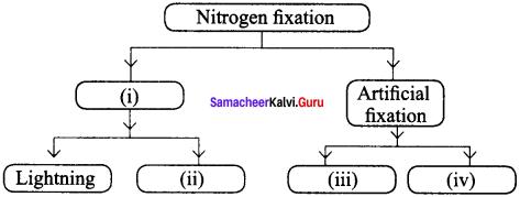 Samacheer Kalvi 8th Science Solutions Term 2 Chapter 3 Air 5