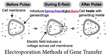Samacheer Kalvi 12th Bio Botany Solutions Chapter 4 Principles and Processes of Biotechnology img 6