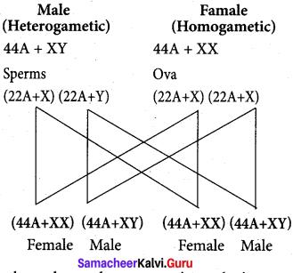 Samacheer Kalvi 12th Bio Zoology Solutions Chapter 4 Principles of Inheritance and Variation img 1