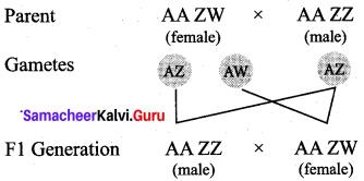 Samacheer Kalvi 12th Bio Zoology Solutions Chapter 4 Principles of Inheritance and Variation img 11
