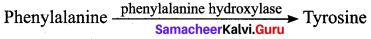 Samacheer Kalvi 12th Bio Zoology Solutions Chapter 4 Principles of Inheritance and Variation img 13