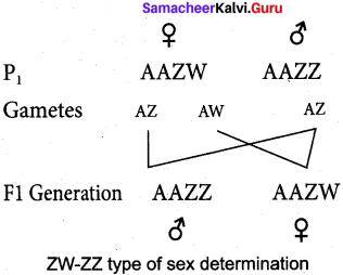 Samacheer Kalvi 12th Bio Zoology Solutions Chapter 4 Principles of Inheritance and Variation img 15