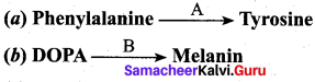 Samacheer Kalvi 12th Bio Zoology Solutions Chapter 4 Principles of Inheritance and Variation img 8