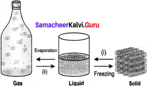 Samacheer Kalvi 7th Science Solutions Term 2 Chapter 3 Changes Around Us image -14