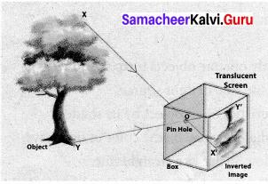 Samacheer Kalvi 7th Science Solutions Term 3 Chapter 1 Light image - 5